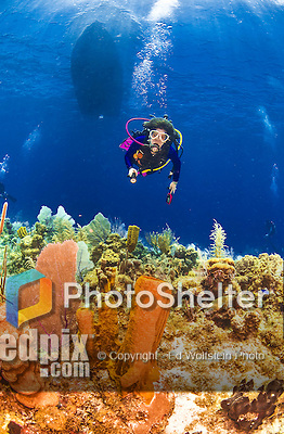 22 July 2015: SCUBA Diver Sally Herschorn, explores the underwater topography at Ocean Pointe Reef, on the North Shore of Grand Cayman Island. Located in the British West Indies in the Caribbean, the Cayman Islands are renowned for excellent scuba diving, snorkeling, beaches and banking.  Mandatory Credit: Ed Wolfstein Photo *** RAW (NEF) Image File Available ***