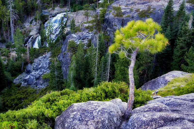 Eagle Falls and small ponderosa ptine tree. California
