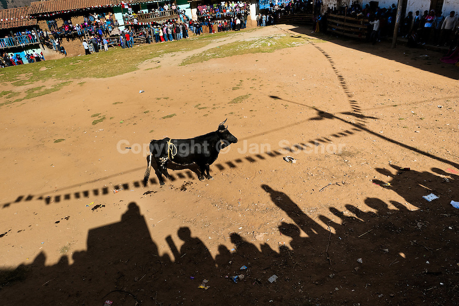 A wild bull waits for a bullfighter during the Yawar Fiesta, a ritual fight between the condor and the bull, held in the mountains of Apurímac, Cotabambas, Peru, 30 July 2012. The Yawar Fiesta (Feast of Blood), an indigenous tradition which dates back to the time of the conquest, consists basically of an extraordinary bullfight in which three protagonists take part - a wild condor, a wild bull and brave young men of the neighboring communities. The captured condor, a sacred bird venerated by the Indians, is tied in the back of the bull which is carefully selected for its strength and pugnacity. A condor symbolizes the native inhabitants of the Andes, while a bull symbolically represents the Spanish invaders. Young boys, chasing the fighting animals, wish to show their courage in front of the community. However, the Indians usually do not allow the animals to fight for a long time because death or harm of the condor is interpreted as a sign of misfortune to the community.