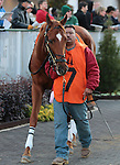 Liberated in the 9th race, The Golden Rod Grade 2 $150,000 at Churchill Downs.  November 24, 2012.