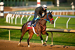 November 1, 2020: Come Dancing, trained by trainer Carlos Martin, exercises in preparation for the Breeders' Cup Filly & Mare Sprint at Keeneland Racetrack in Lexington, Kentucky on November 1, 2020. Alex Evers/Eclipse Sportswire/Breeders Cup /CSM