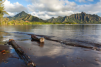 Driftwood along the shoreline of Kane'ohe Bay with the Ko'olau Mountains in the background, Waiahole Beach Park, O'ahu.