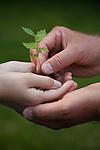 USA, Illinois, Metamora, Man giving small seedling to boy (10-11)