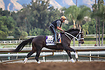October 26, 2014: Pants On Fire exercises in preparation for the Breeders' Cup Dirt Mile at Santa Anita Park in Arcadia, California on October 26, 2014. Zoe Metz/ESW/CSM