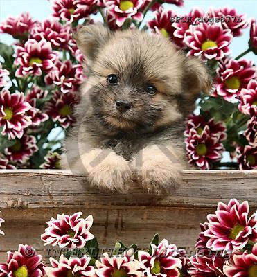 Xavier, ANIMALS, dogs, photos+++++,SPCHDOGS877B,#a# Hunde, perros