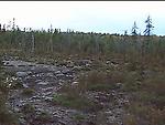 Moose wallo, Northeastern New Hampshire/Maine border