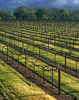 Agricultural landscape of vineyards in early spring. Napa Valley, California.