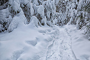 Greeley Pond Trail in the White Mountains, New Hampshire USA during the winter months.