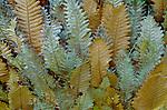 Ferns in the Cape Tribulation rainforest of Queensland, Australia.