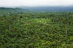 Disturbed secondary lowland rainforest, Kinabatangan River, Sabah, Borneo, Malaysia
