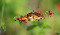 Beautiful Very Fancy Wing Butterfly Perched On A Plant