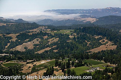 Aerial photograph Sonoma Coast Pinot Noir vineyards
