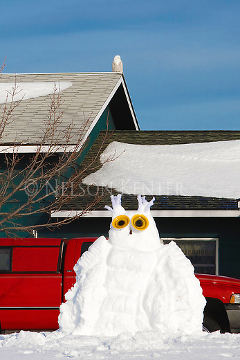 A snow sculpture of a snowy owl in a yard with a real snowy owl perched on the roof of the house