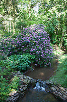 A view through the colourful Rhododendron wood, planted in the 1950s by Jack Lucas Scudamore
