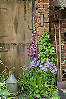 Heirloom flowers Digitalis and phlox, climbing Hedera vine, with rustic garden tools, farm barn door, thermometer, chicken water feeder, antiques, spring garden scene with charm, May or June . Board and batten door