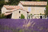 Europe/France/Rhône-Alpes/26/Drôme/Le Poët-Laval: Champ de lavande et ferme