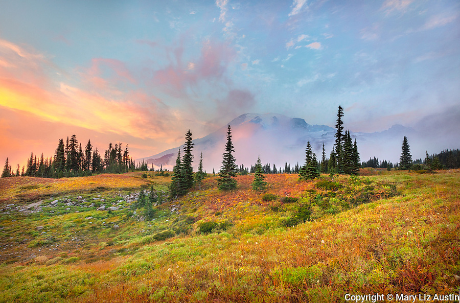 Mount Rainier National Park, WA: Sunset in the high alpine meadows in autumn with Mount Rainier in the distance