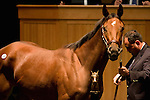 07 November 2010.  Hip #10 Awesome Feather, winner of the Breeders Cup Juvenile fillies became the Fasig Tipton November sale topper with a final bid of $2,300,000. .Consigned by Hidden Brook, agent, she was purchased by Adena Springs.