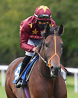 Us Cliff ridden by Sean Levey goes down to the start of The Radcliffe & Co Novice Median Auction Stakes (Div 1) during Horse Racing at Salisbury Racecourse on 11th September 2020