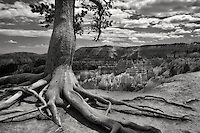 Exposed tree roots and rock formations hoodoos in Bryce National Park, UT