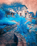 """City Hall, Monterey, California (Infrared) ©2017 James D Peterson.<br /> <br /> Limited Edition - Call Jim at 928-554-4340 for current availability.<br /> <br /> This image was selected for the """"Seeing Blue"""" exhibit at Gallery 25N."""