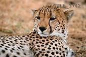 Carl, ANIMALS, wildlife, photos(SWLA3742,#A#)