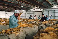 Grower Tim Mahmut, Mareeba Sales Floor, Mareeba, 2002.