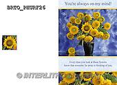 Alfredo, FLOWERS, BLUMEN, FLORES,  photos+++++,BRTOPHURF26,#F#