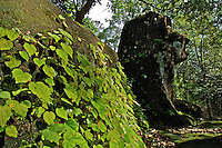 Mt. Kulen Jungle and ancient Khmer Sculptures hidden deep in the Jungle