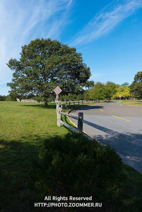 Green tree on Cape Cod near the Salt Pond visitors center