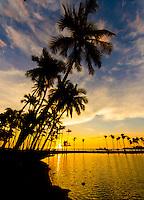 Silhouetted palm trees seem to lean into a colorful sunset at 'Anaeho'omalu Bay, Waikoloa Beach, Big Island.