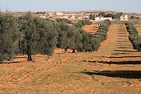 Near Tarhouna, Libya - Olive Trees, Rural Houses