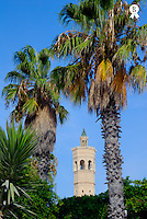 Tunisia, Mahdia, minaret of mosque in between palm trees, blue sky (Licence this image exclusively with Getty: http://www.gettyimages.com/detail/sb10065145br-001 )