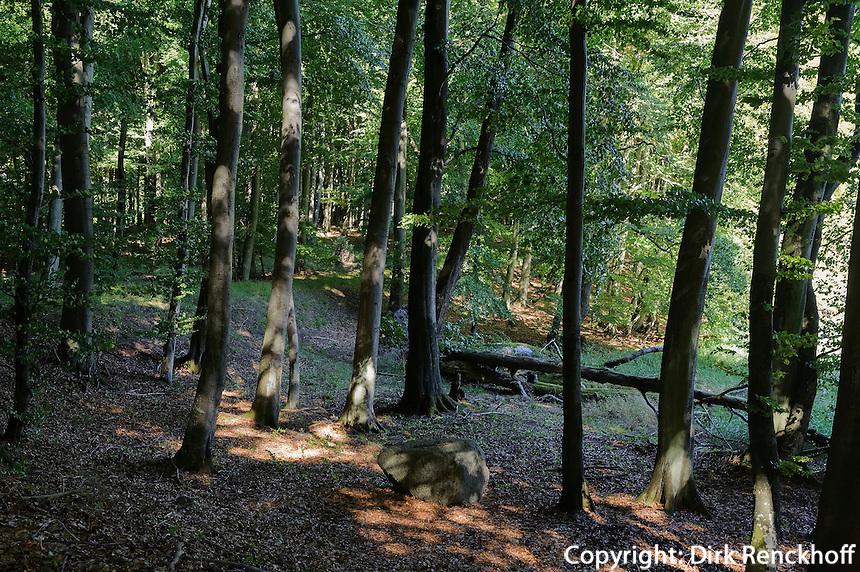 Buchenwald im Nationalpark Jasmund auf der Insel Rügen, Mecklenburg-Vorpommern, Deutschland, Unesco-Weltnaturerbe