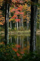 Birch and maple trees and other fall foliage turn colorful around Launt Pond, in Bear Spring Mountain Campground, Downsville, New York, within Catskill Park.<br /> <br /> © Michael Forster Rothbart<br /> www.mfrphoto.com <br /> 607-267-4893 o 607-432-5984<br /> 5 Draper St, Oneonta, NY 13820<br /> 86 Three Mile Pond Rd, Vassalboro, ME 04989<br /> info@mfrphoto.com<br /> Photo by: Michael Forster Rothbart<br /> Date: 9/2010    File#:  Canon 5D digital camera frame 71120.<br /> ----------<br /> Original caption:<br /> Birch and maple trees and other fall foliage turn colorful around Launt Pond, in Bear Spring Mountain Campground and game management area, Downsville, NY, in Delaware County and within Catskill Park. Local fisherman Mike Kopps of Walton, NY, canoes with a friend on the pond.
