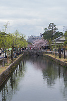 Japan, Okayama Prefecture, Kurashiki. Cherry blossoms on the river.