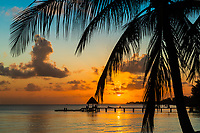 Colorful sunset on a coconut poalm tree and a pier with thatched roof silhouette, in Rangiroa Tuamotus atoll, French Polynesia, South Pacific Ocean