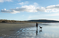 Dog fetching at the beach.