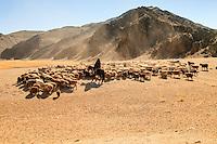 Asia Mongolia, Altai mountain,Saikhsai, mongolian landscape with a Shepper driving his flock