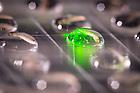 June 20, 2016; Mosquito larva under UV light, Whaley lab (Photo by Matt Cashore/University of Notre Dame)