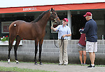Hip #7 Bernardini - Our Legacy colt being inspected by trainer, Todd Pletcher at the  Keeneland September Yearling Sale.  September 9, 2012.