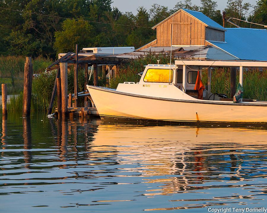 Tilghman Island, Maryland<br /> Morning sun on fishing boats  docked along Knapp's Narrows, Chesapeake Bay