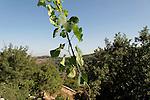 G-182 The Biblical Garden in Yad Hashmona