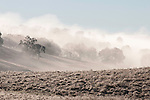 Winter fog drifts through the landscape during winter in the Mother Lode, Jackson, Calif.