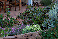 Mahonia repens, Creeping Mahonia with purple berries in New Mexico drought tolerant backyard garden with Kent Beauty Oregano and Prickly Dianthus by dining patio, design by Judith Phillips