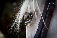 Strands of gray mane frame a horse's eye as it surveys the exercise area on a summer's late afternoon.