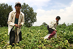 A Native couple harvest beans in a land of Progreso, in northern state of Hidalgo. Photo by Heriberto Rodriguez