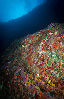 Encrusting corals and sponges give a paint splatter look to the rocks of Moku Manu, Windward O'ahu.