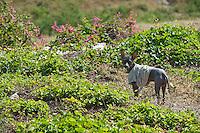 Rural Scene. Santiago del Cuba. 7-12-10