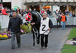 LOUISVILLE, KY - NOV 12: Foreground, Sir Dudley Diggs, winner of the 2016 Queen's Plate, and in the background One Mean Man in the paddock at Churchill Downs, Louisville, Kentucky, before the running of the Commonwealth Turf Cup. (Photo by Mary M. Meek/Eclipse Sportswire/Getty Images)